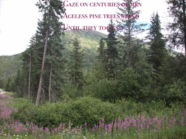 Wonder Haiku 27