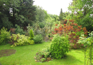 the big old conifers were cut down this year. The new shrubs are my new additions to the garden.